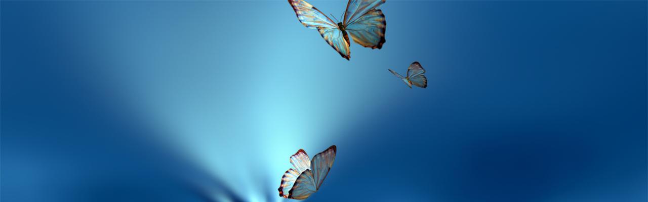 image of butterflies